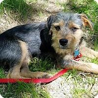 Adopt A Pet :: Bruno - Minneapolis, MN