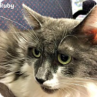 Adopt A Pet :: Ruby - Oakville, ON
