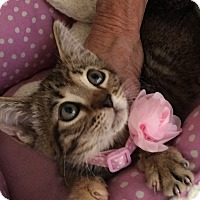 Adopt A Pet :: Iris - Metairie, LA