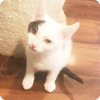 Adopt A Pet :: Ronnie - Xenia, OH