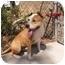 Photo 3 - Pit Bull Terrier Mix Dog for adoption in El Cajon, California - Bongo