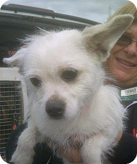 Terrier (Unknown Type, Medium) Mix Puppy for adoption in Los Angeles, California - TABATHA ROSE
