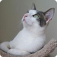 Adopt A Pet :: Rocky - Palatine, IL