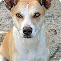 Adopt A Pet :: Nuzzy - Clinton, LA
