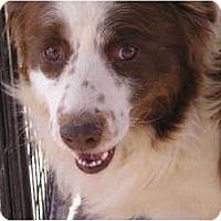 Adopt A Pet :: Wiley - San Diego, CA