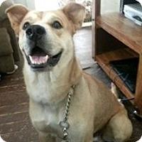 Adopt A Pet :: Kenai - Painesville, OH