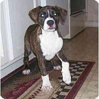 Adopt A Pet :: Star - Chandler, IN