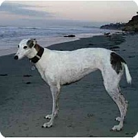 Adopt A Pet :: Lucy - Carlsbad, CA