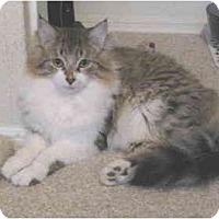 Adopt A Pet :: Mannie - Mesa, AZ