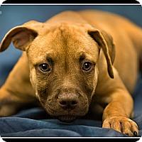 Adopt A Pet :: Ace - Wickenburg, AZ