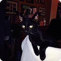 Adopt A Pet :: Pumpkin - Modesto, CA