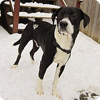 Adopt A Pet :: Buddy - Hamilton, ON