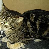 Adopt A Pet :: Sachmo - Bethpage, NY