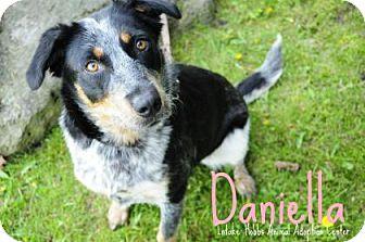 Australian Cattle Dog Mix Dog for adoption in Hamilton, Ontario - Daniella