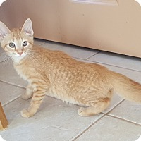 Adopt A Pet :: Rocky - Warren, OH