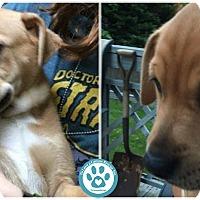 Adopt A Pet :: Jett - Kimberton, PA