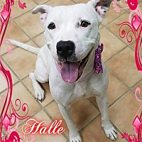 Adopt A Pet :: Halle - Buffalo, IN