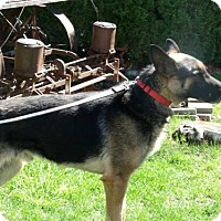 Adopt A Pet :: Damien - Yakima, WA