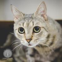 Adopt A Pet :: AJ - Whitby, ON