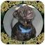 Photo 1 - American Staffordshire Terrier Mix Dog for adoption in West Warwick, Rhode Island - Patrick