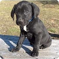 Adopt A Pet :: Pepper - Clayton, OH