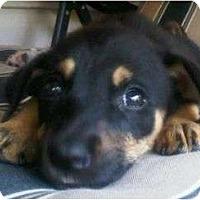 Adopt A Pet :: Peanut - Plainfield, CT