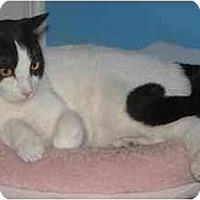 Adopt A Pet :: Rae Marie - Belton, MO