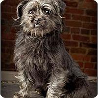 Adopt A Pet :: Abby - Owensboro, KY
