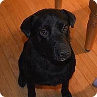 Adopt A Pet :: Bodie - Wilmette, IL