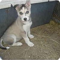 Adopt A Pet :: Carolina - Jacksonville, NC