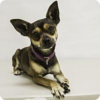 Adopt A Pet :: Gordon - Mission Viejo, CA