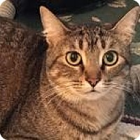 Adopt A Pet :: Crown - Bruce Township, MI