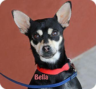 Chihuahua Mix Dog for adoption in Idaho Falls, Idaho - Bella