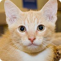 Adopt A Pet :: Peanut - Irvine, CA