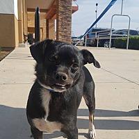 Adopt A Pet :: Jedi - Fresno, CA