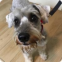Adopt A Pet :: Dori - Redondo Beach, CA