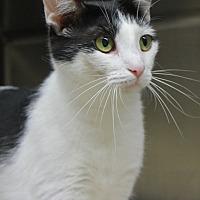 Adopt A Pet :: Minnie - Portland, IN