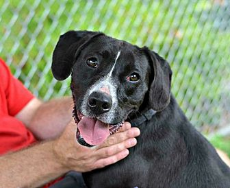 Mixed Breed (Medium) Mix Dog for adoption in Cranford, New Jersey - Fred
