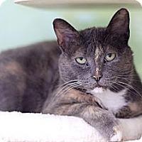 Adopt A Pet :: Twyla Tharp - Chicago, IL