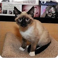 Adopt A Pet :: Boscoe - Farmingdale, NY
