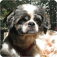 Adopt A Pet :: BoBo-NJ - Mays Landing, NJ