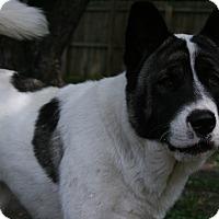 Adopt A Pet :: Biskit - Virginia Beach, VA