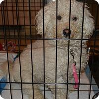 Adopt A Pet :: Travis  14 lbs - Warwick, NY