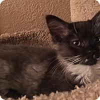 Adopt A Pet :: MarlaA - North Highlands, CA
