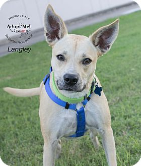 Australian Cattle Dog Mix Dog for adoption in Houston, Texas - Langley