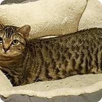 Adopt A Pet :: Demi - N. Billerica, MA