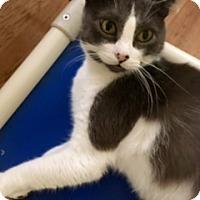 Adopt A Pet :: JACOB - Washington, NC