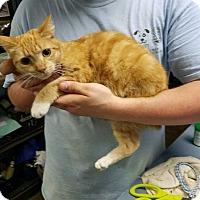 Adopt A Pet :: Star (Needs Foster) - Washington, DC