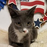 Adopt A Pet :: Chicklet - Brownwood, TX