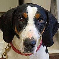 Adopt A Pet :: Rebel - Sprakers, NY